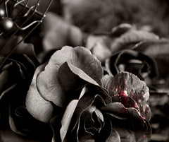 black rose broken heart