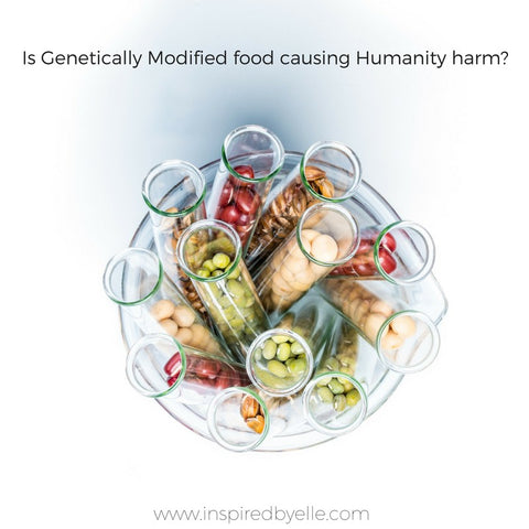 Blog Article Is Genetically Modified Food Harmful to Humanity by Elle Smith Inspired By Elle Creative Blog