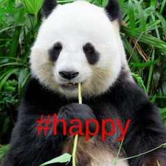 giant panda happy no longer endangered