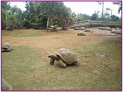Giant Tortoises at Nature Park Mauritius by Elle Smith