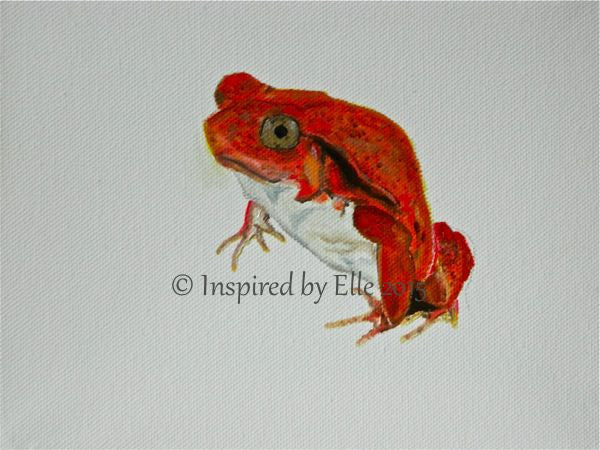 Animal Art Painting The Madagascar Tomato Frog oil paint Elle Smith endangered species Inspired By Elle