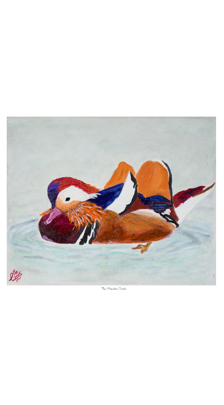 Limited Edition Giclee Print The Mandarin Duck animal art endangered species Elle Smith Inspired By Elle
