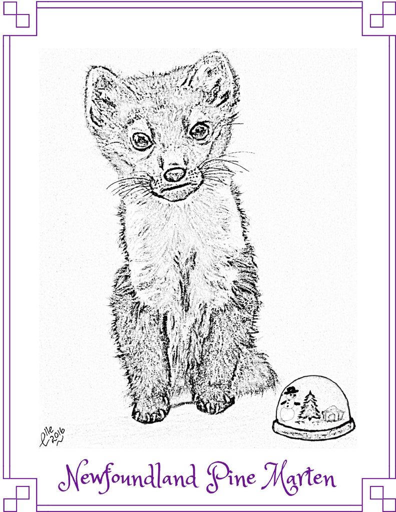 Colouring Book Image from Colour Us Back from Extinction By Elle Smith of Newfoundland Pine Marten