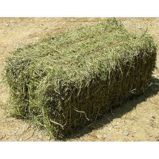 lucerne hay gobles pet and grain adelaide