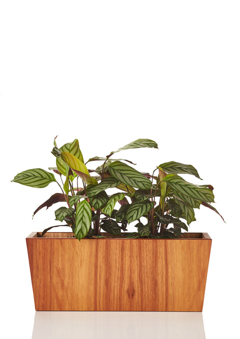 Arizona Planter Short