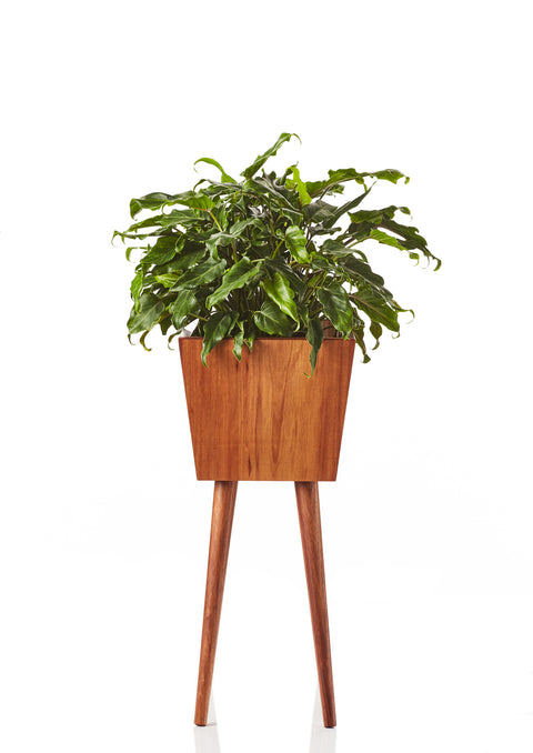 Arizona Planter • Tall