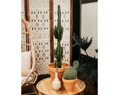 Cactus Plant - Tall & Skinny