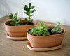 Blush Oval Terra Cotta Plants