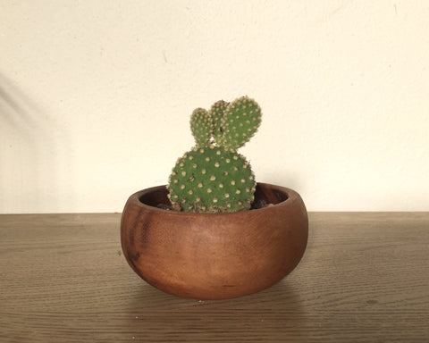 Mini wood bowl cacti
