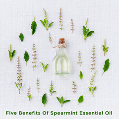 Five Benefits Of Spearmint Essential Oil