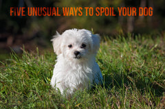 Five Unusual Ways To Spoil Your Dog