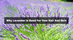 Why Lavender Is Good For Your Hair And Skin