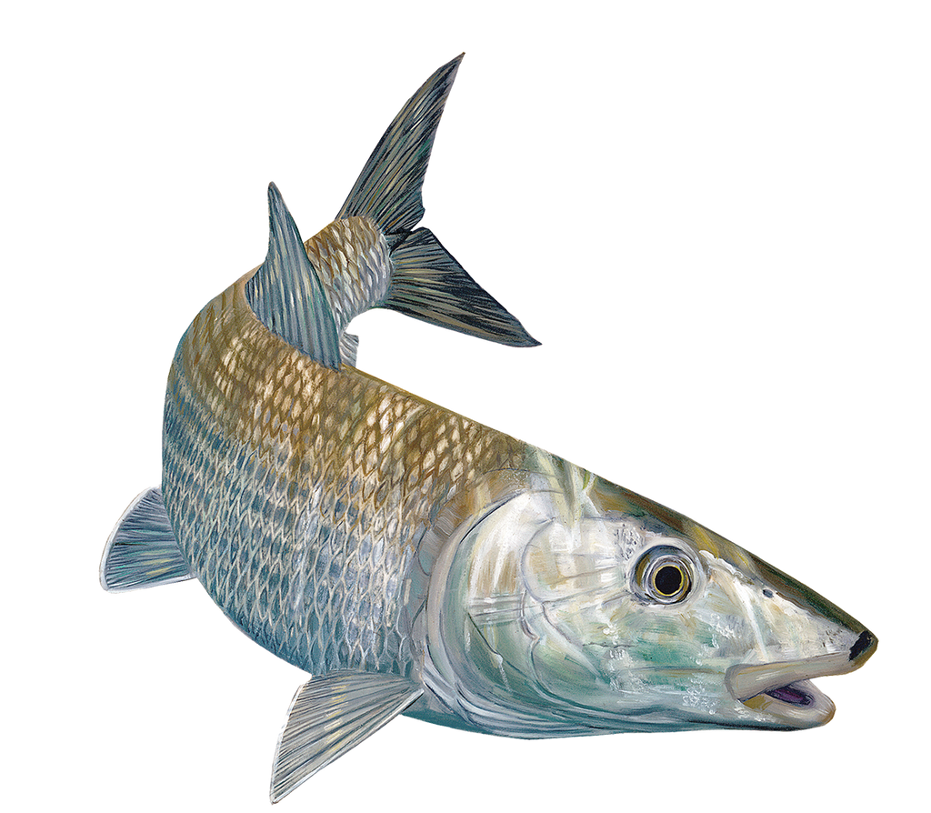 Bonefish Decals by Randy McGovern - Decals Stickers - Skiff Life