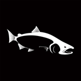 Skiff Life King (Chinook) Salmon Car Decal Stickers in Black or White - Decals / Stickers - Skiff Life