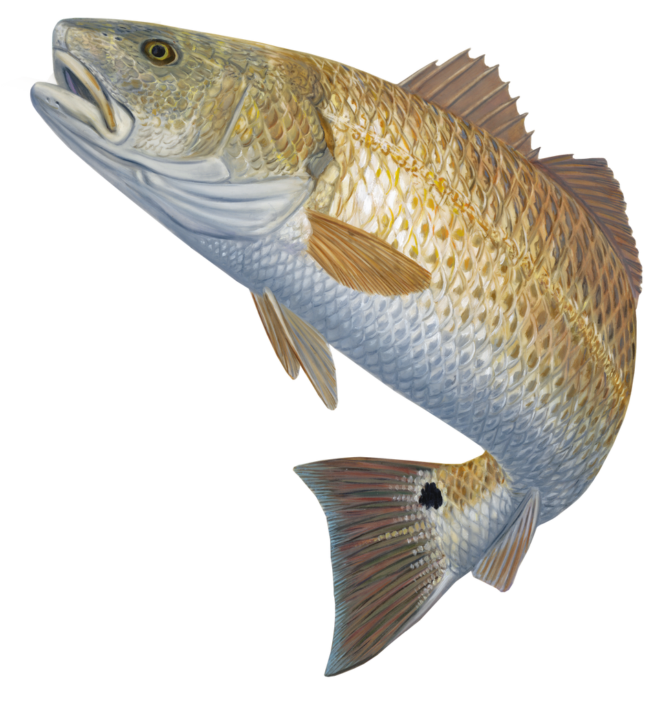 Skiff Life Red Hot Redfish Fishing Decal Sticker Randy McGovern Art - Skiff Life - We Fish Skinny Water! - 2