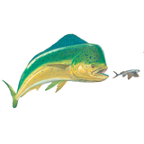 Mahi Dolphin Fishing Decal - Skiff Life