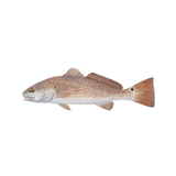 Redfish Decal Lifelike Mini - Skiff Life