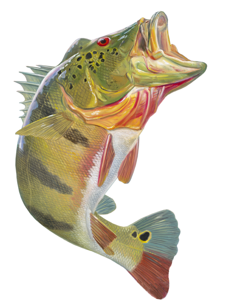 Peacock swamp bass car decal peacock bass stickers truck for Randys fishing trips