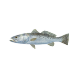 Speckled Trout Decal Mini - Skiff Life
