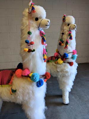 Large White Llama with Pompoms