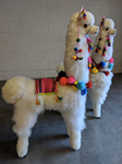 Large Llama with Pompoms
