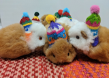 stuffed animal guinea pig with knitted colorful hat