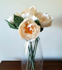 Peony in Bloom - Cream