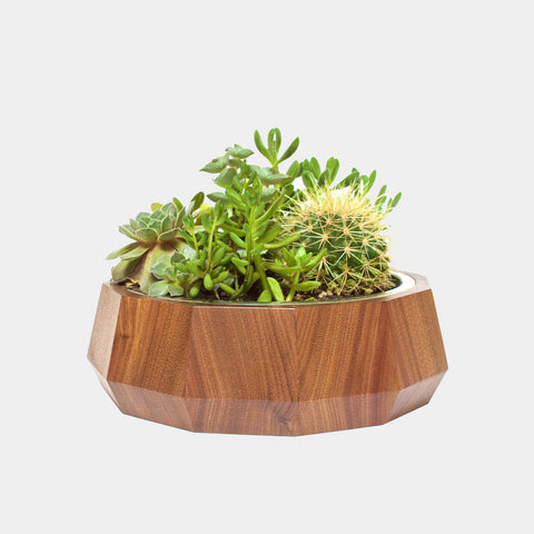 Gobi SandBox XL | Walnut
