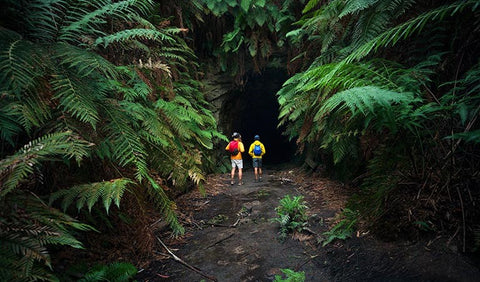 Glow Worm Tunnel Track Wollemi National Park