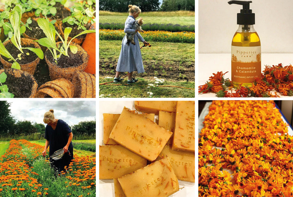pippettes farm products calendula infused oils and soap