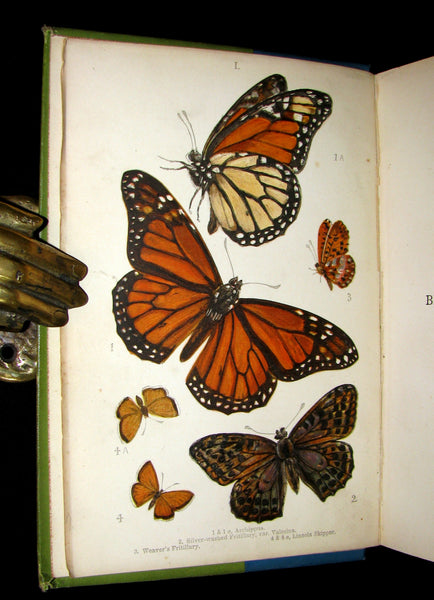 1897 Rare Book - British Butterflies, Figures and Descriptions of Every Native Species by W. S. Coleman.
