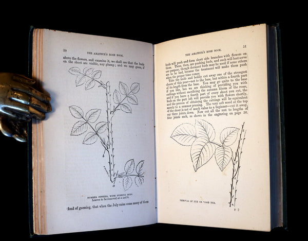 1878 Rare Victorian Gardening Book - The Amateur's Rose Book by the famous botanist James Shirley Hibberd.