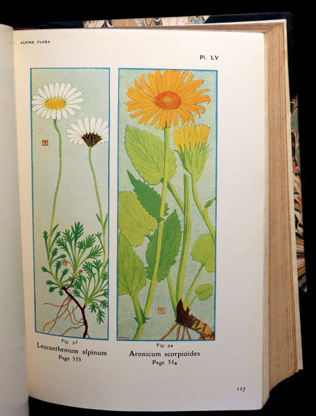 1911 Rare Book - The ALPINE FLORA (Flowers) by Henry Correvon illustrated in water-colour.