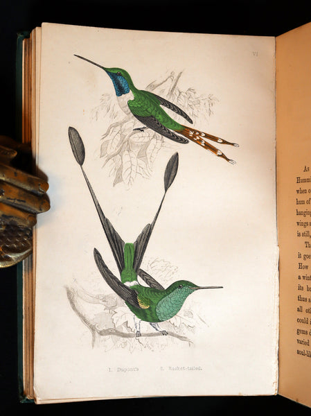 1856 Scarce Ornithology Book ~ HUMMING BIRDS described & Color Illustrated. By Henry Gardiner Adams.