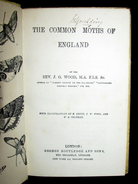 1880 Rare Book - The Common Moths of England by Rev. J. G. Wood
