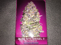 ADVANCED SEEDS AUTO NYC DIESEL AUTOS FEM 5S