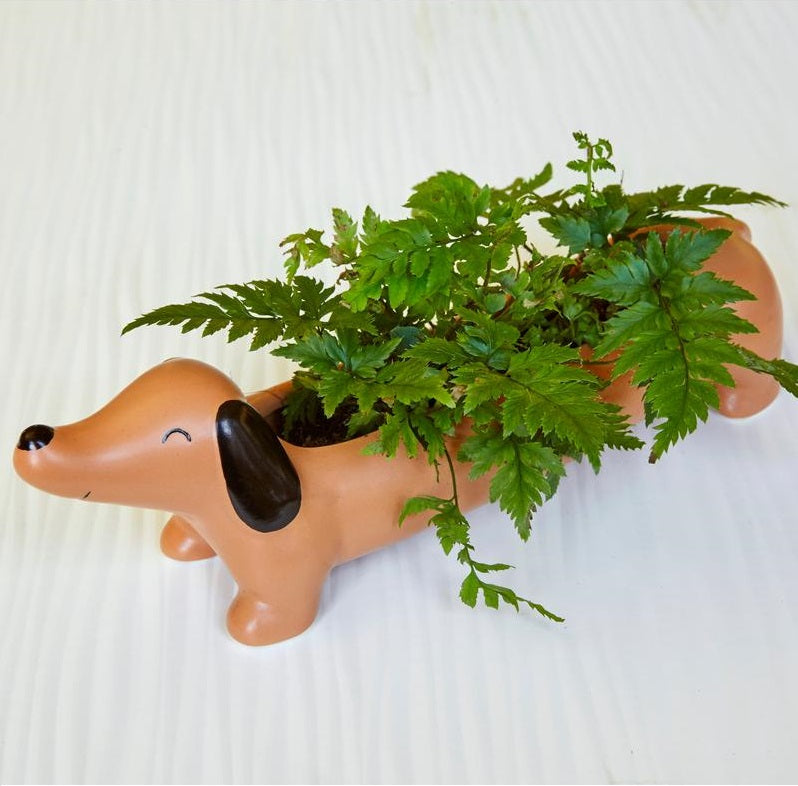 Daisy The Dachshund Planter - The New York Public Library Shop