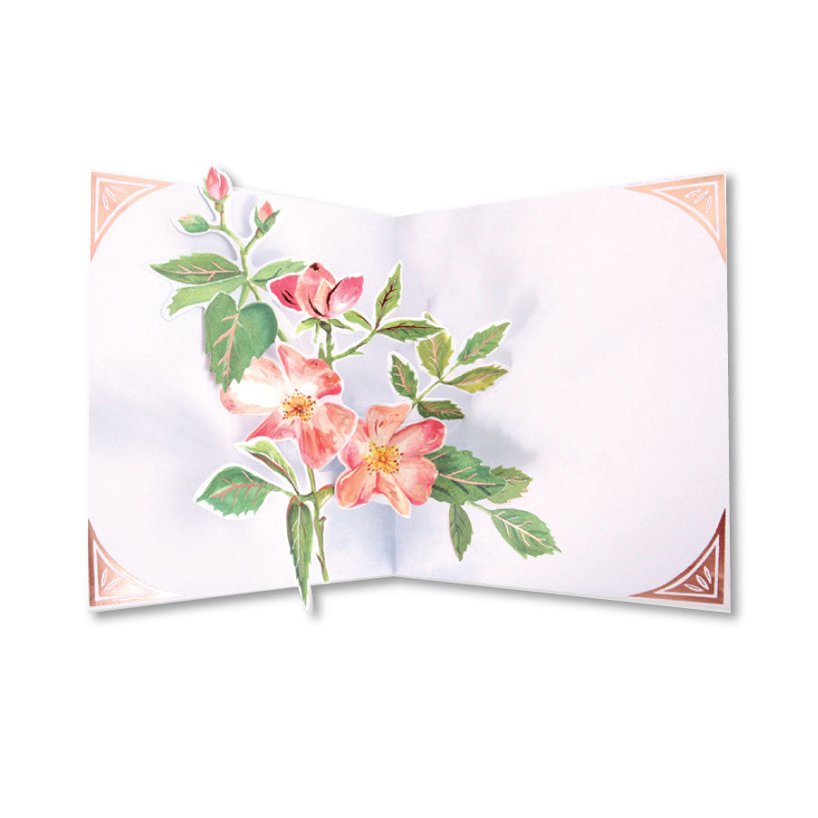 Seed Packet Pop-Up Notecard