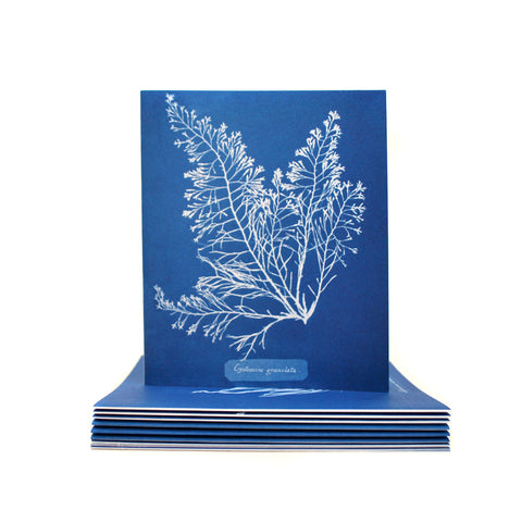 Anna Atkins Cyanotypes: 12 Sunprint Notecards
