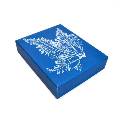 Anna Atkins Cyanotypes: 12 Sunprint Notecards - The New York Public Library Shop