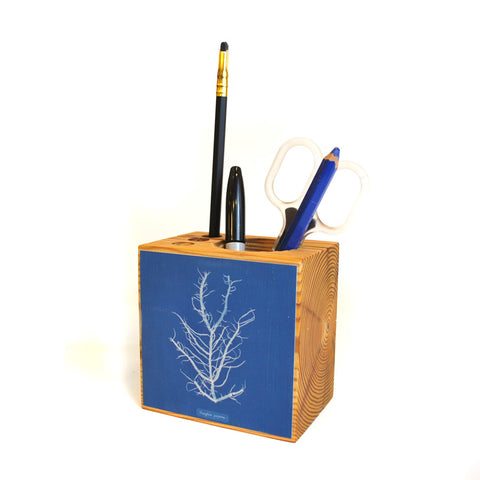 Desk caddie with mesogloia purpurea algae illustration on blue background.