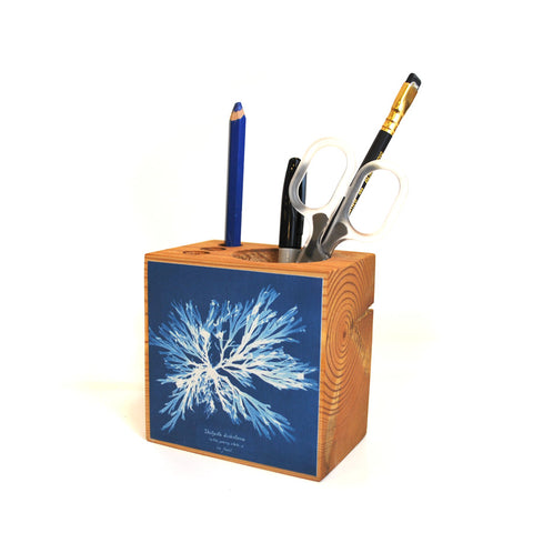 NYPL Anna Atkins Cyanotypes: Decoupage Desk Caddy