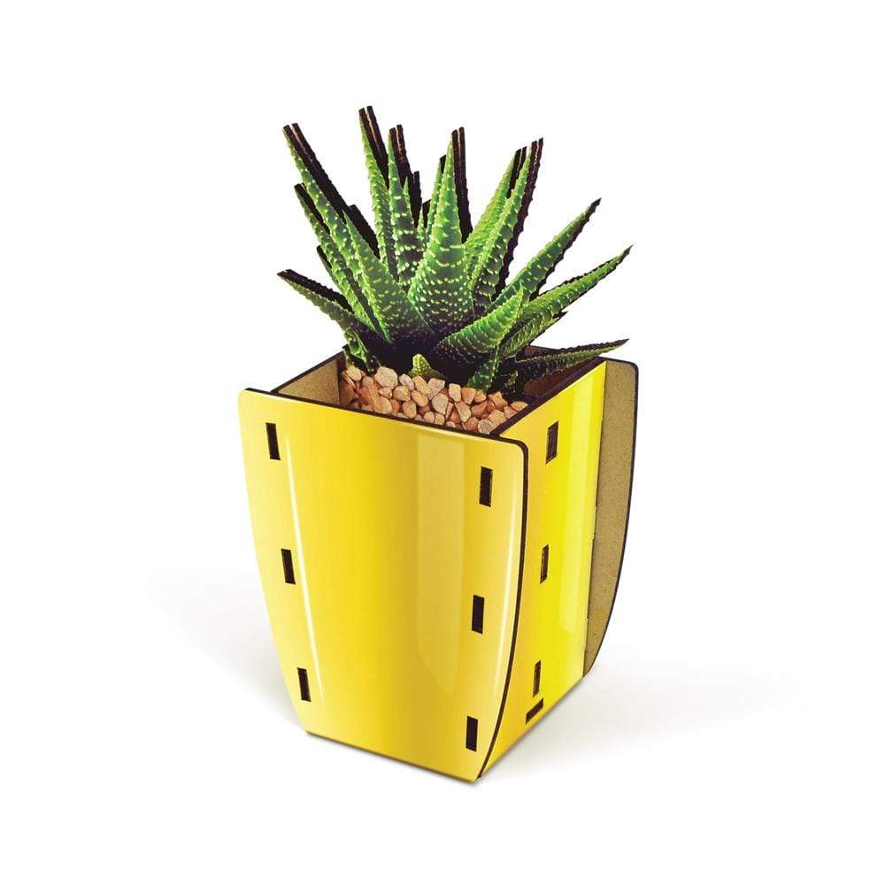 Aloe POP Pencil Holder