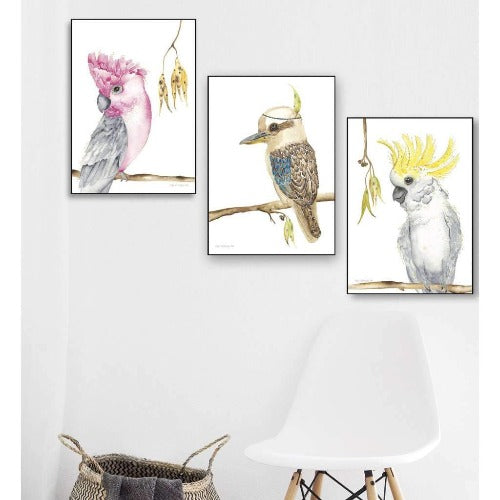 Australian Birds set of 3 prints, by Kylie Ferriday. Australian Art Prints. Green Door Decor.  www.greendoordecor.com.au