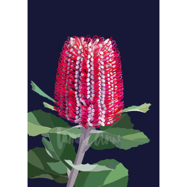 Banksia Coccinea print, by Lamai Anne. Australian Art Prints. Green Door Decor. www.greendoordecor.com.au