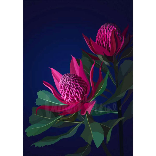Berry Waratahs (Limited Edition)