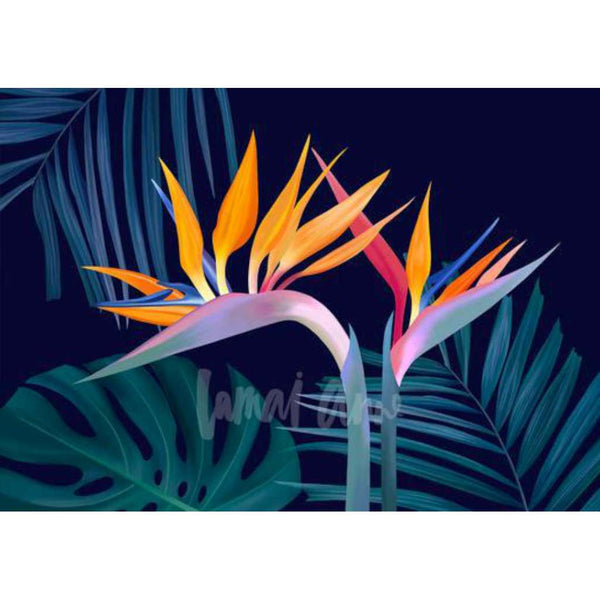 Birds of Paradise, by Lamai Anne. Australian Art Prints. Green Door Decor.  www.greendoordecor.com.au