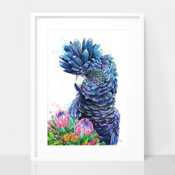 Black Cockatoo and Protea print, by Earthdrawn Studio. Australian Art Prints. Green Door Decor.  www.greendoordecor.com.au