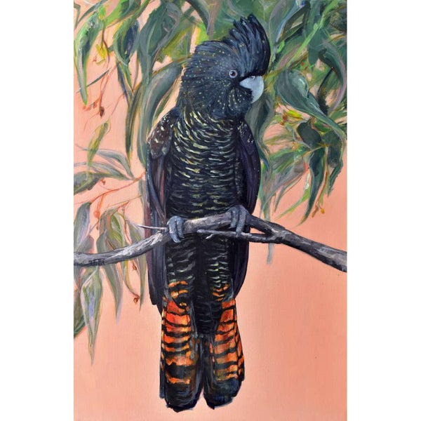 Black Cockatoo - Flora & Fauna Series by Bexart, Australian Art Prints. Green Door Decor.  www.greendoordecor.com.au