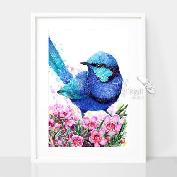 Blue Wren and Geraldton Wax print, by Earthdrawn Studio. Australian Art Prints. Green Door Decor. www.greendoordecor.com.au